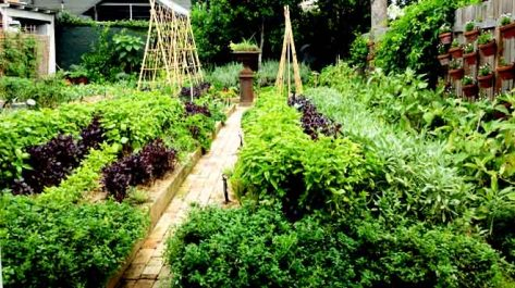 Chiswick Kitchen Garden