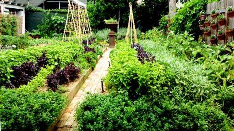 Chiswick Kitchen Garden
